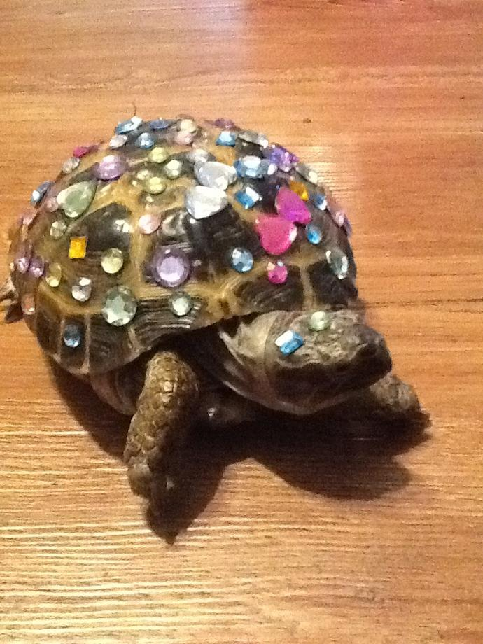 Do you think this turtle looks pretty?