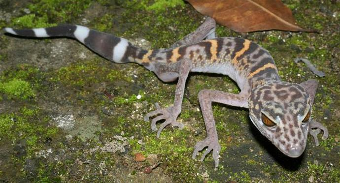 Why do reptiles usually look evil?