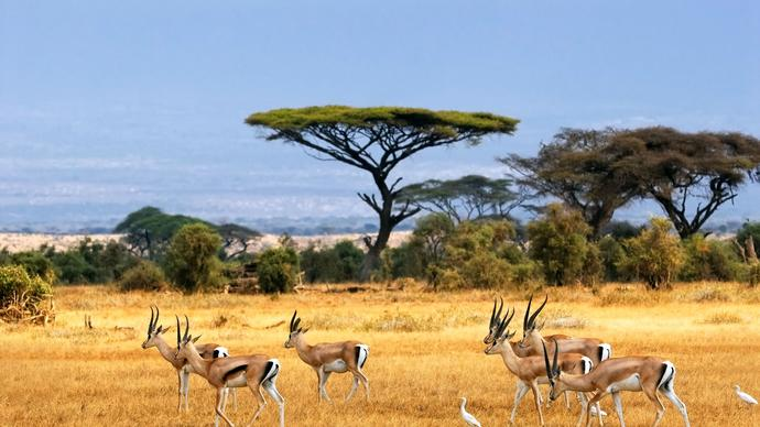 Have you ever been to African savanna?