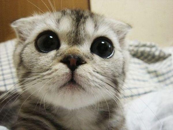Preferred Feline Paraphernalia?