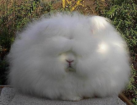What Do You Have To Say About This Bunny?