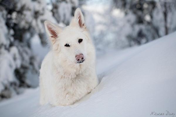 Favorite Breed of Dog?