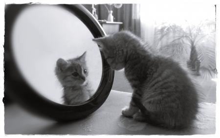 When you look in the mirror do you like what you see?