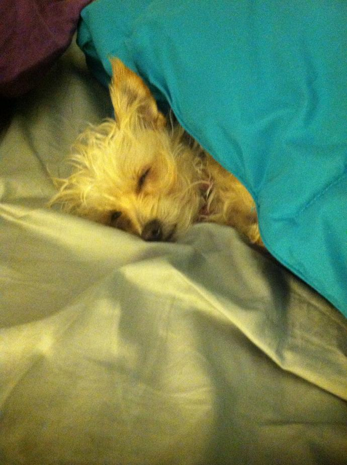 Upload a sleeping picture of your pet?