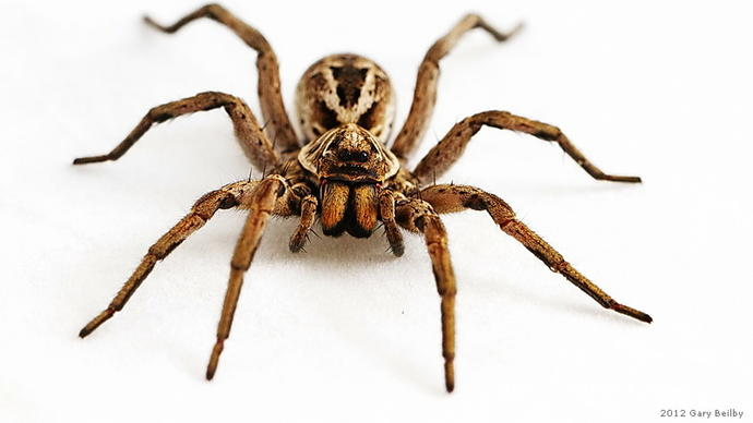 How would you react if you literally turned/morphed into a giant spider?