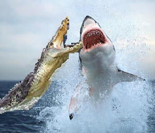 What do you think are scarier Sharks or Crocodiles?