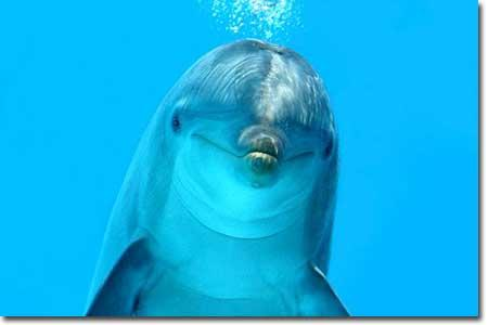 Would you ever want to have a dolphin as your pet?