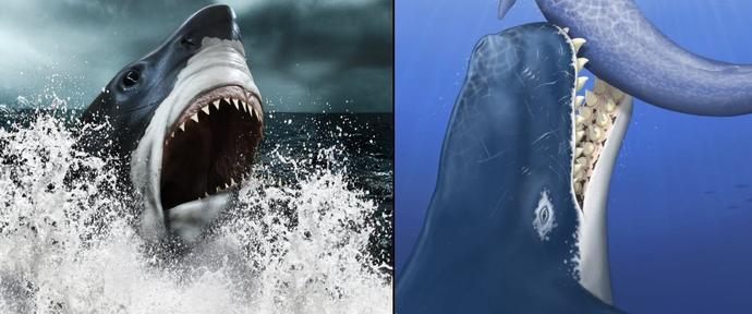 What do you think of this idea for a shark week documentary: Megalodon vs Leviathan?