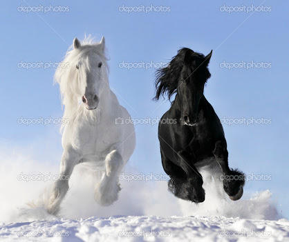 Which horse looks more pretty?
