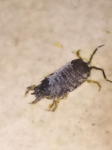 What Bug Is This?