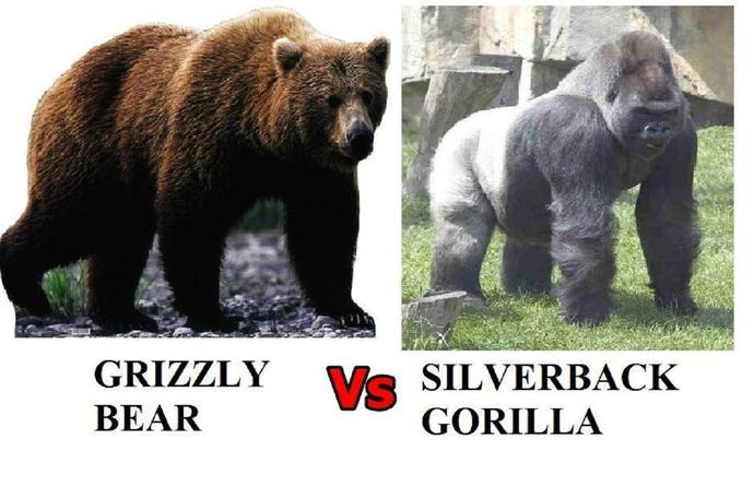 Which would win: Grizzly vs Gorilla? Lion vs Tiger ...