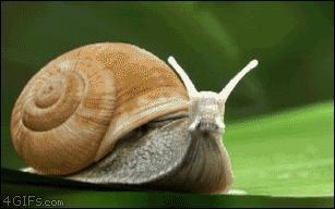 Would you rather eat 5 raw slugs or 2 raw snails (shell and all) ?