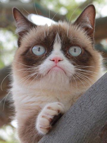 Grumpy Dog VS. Grumpy Cat?