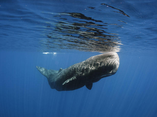 (Quiz) What kind of whale do you think like?