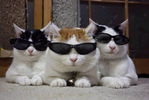 What would be YOUR reaction to seeing a CAT waltzing around with Sunglasses on?
