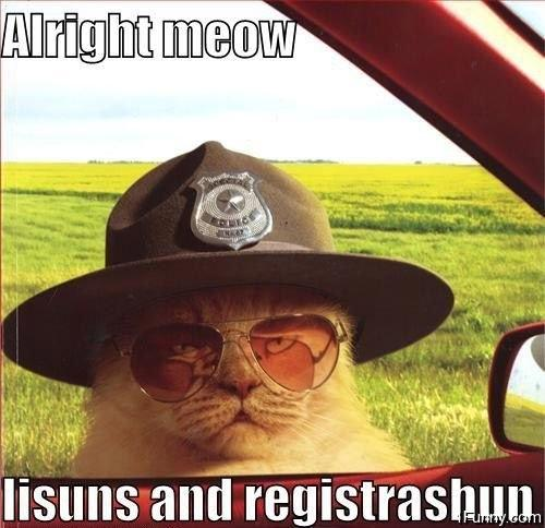 How would you react if you were pulled over by the police and the officer who pulled you over was..... a CAT?