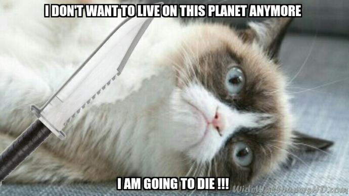 On a scale of 1 to 9 (lives) how dead is grumpy cat right now?