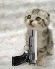 What would you say to this KITTEN to stop him from shooting himself?