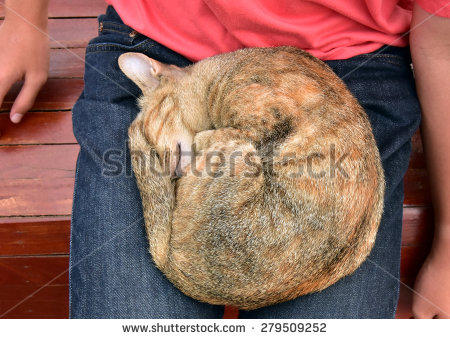 How would you react if you were sitting outside and a CAT randomly jumps onto your lap and starts sleeping?