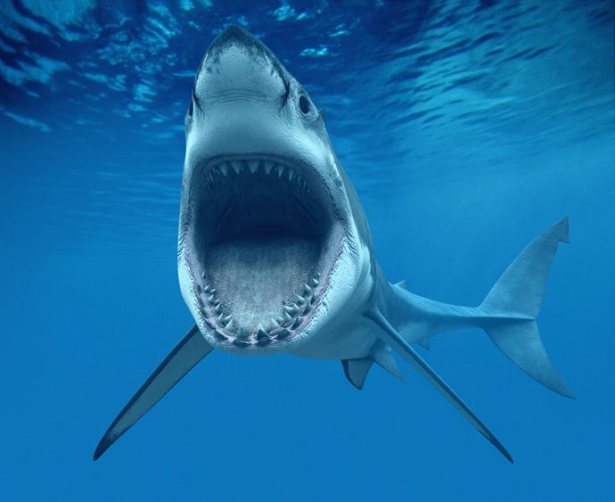 Would you rather get attacked by a shark or a seabear?