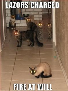 What would you do if you saw all these CATS staring at you?