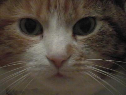 This CAT stares at you intensely. What do you do?