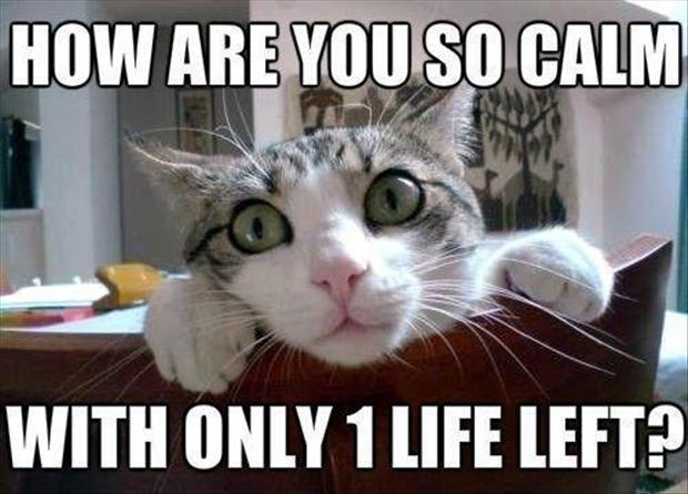 Do cats have 7 or 9 lifes?