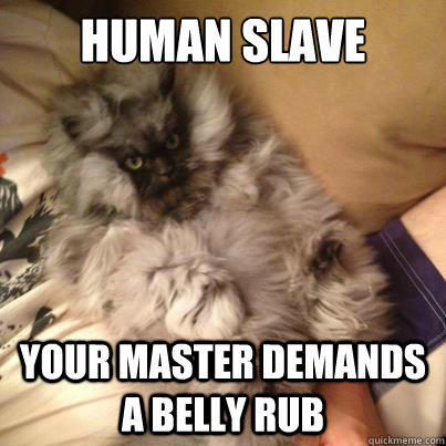CAT owners, do you own your kitty, or does your kitty own you?
