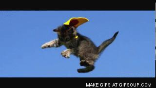 If you saw a CAT flying, what would be your first thought?