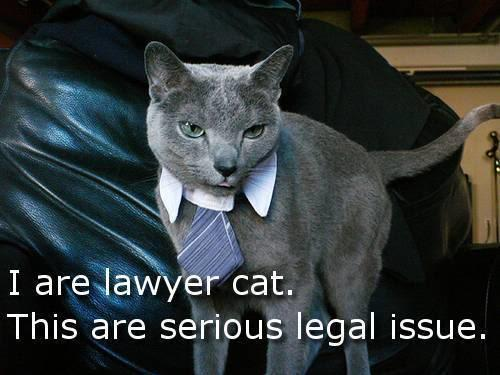 Do you have any objections to raise to LAWYER CAT?