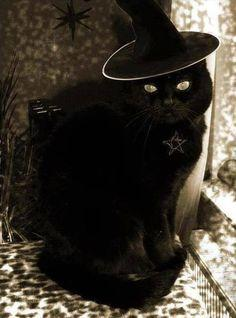 Evil WITCH CAT has just turned you into a slimy toad! What do you do?