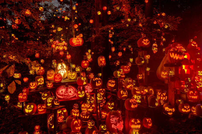 Are you going to have any Halloween decorations this year? (if so please explain what kind in the comments below)?