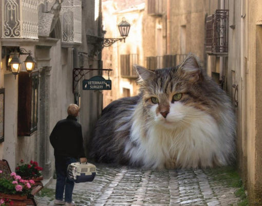 How would you react if you saw a GIANT KITTY?