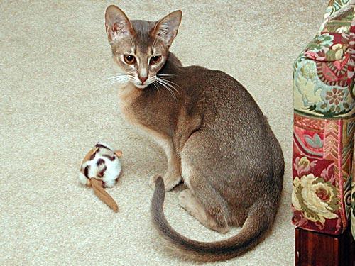 dating guys with cats Kokona wears the default female school uniform,  if saki learns about kokona's compensated dating,  cats - make kokona follow the player near the kitten.