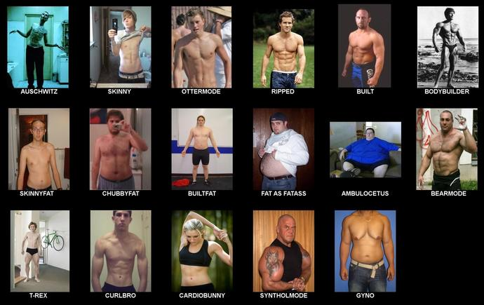 Guys which one are you and girls which one are you attracted to mostly?
