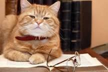 What would YOU do if you walked into a room and caught a CAT reading a book?