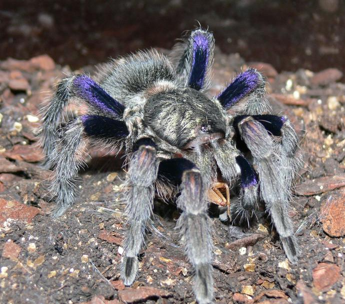 For those of you who hate spiders, can you see the beauty in this specimen, or is your fear so great that it still looks like devil spawn?