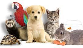 Have you got a pet?