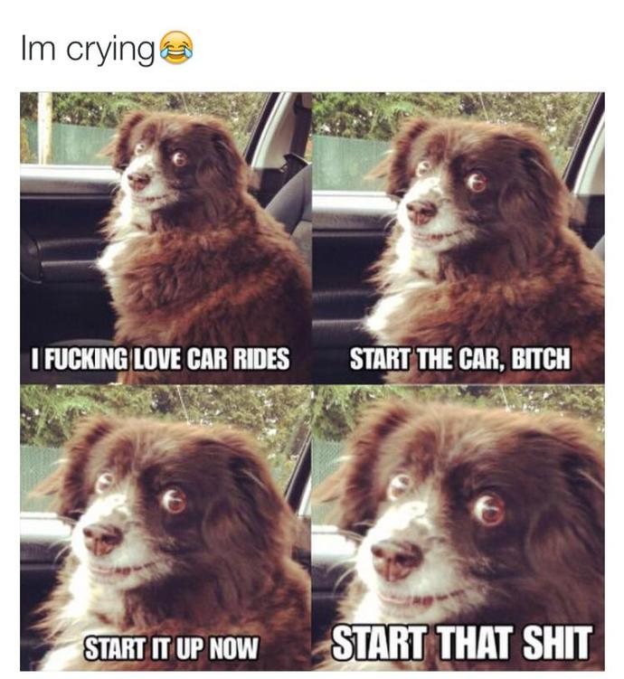 Will you take this dog on a car ride?