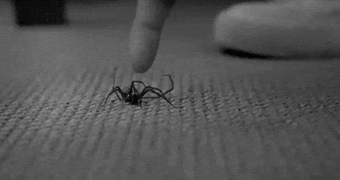 What freaks you out. Do you have a phobia?