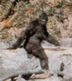 Poll: what's your favorite cryptid animal?