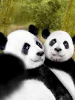 Do you like Panda Express🍴!?
