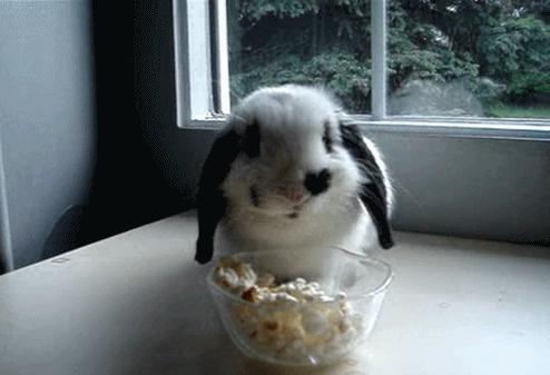 Pet Rabbit: Yay or Nay?