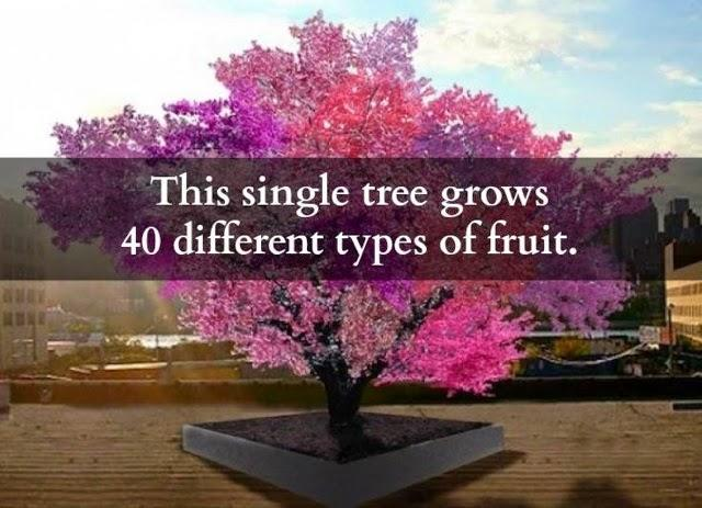 Would you get a The Tree of 40 Fruit?