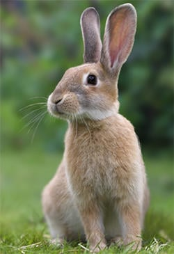 On rabbits, do you prefer ears sticking up or floppy ears?