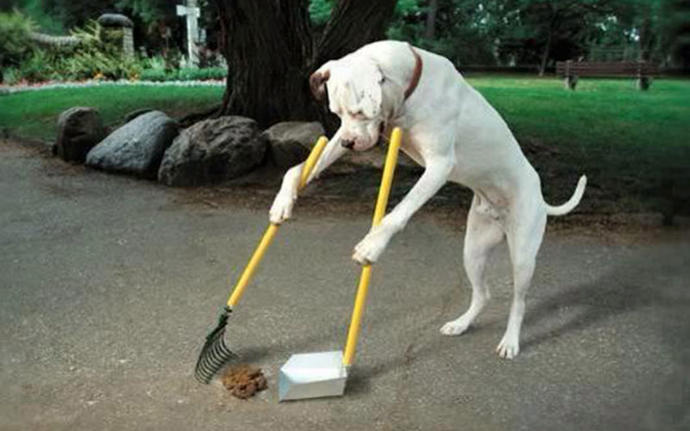 Would you ever volunteer to pick up dog feces from the park without being paid?