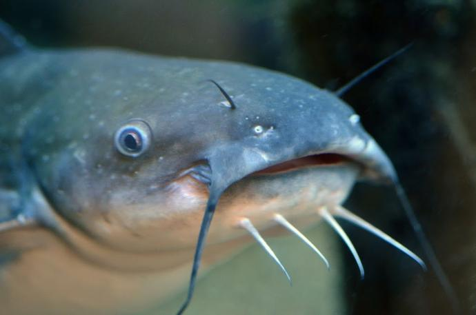 Have you ever been a catfish?