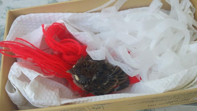 Please help! How to help a little bird falling down from her nest?