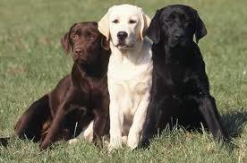 What is the most affectionate, cuddly breed of dog?