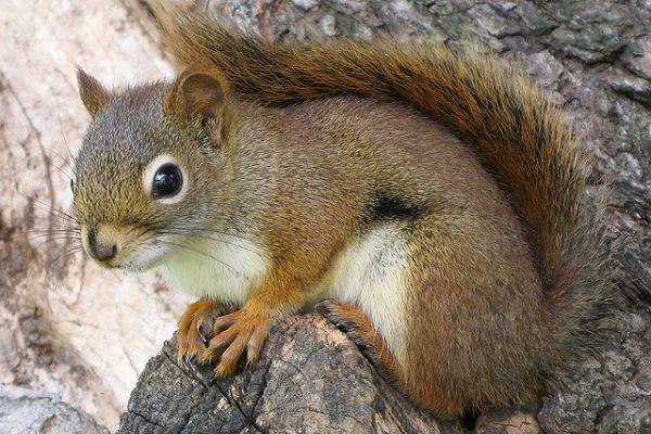 Gagers, do you think squirrels are just the adorableness little creatures 😍😍?